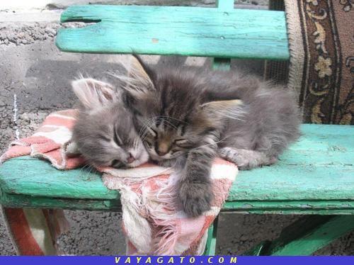 parte superior dormido